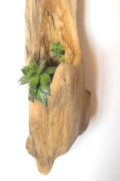 Hanging Driftwood Planter. $50.00, via Etsy.