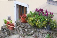 Istutukset Motovunin muureilla - Motovun vanha kaupunki vanhakaupunki pikkukaupunki kivetty seinusta kuja rakennus talo seinä ikkuna kukat kesäkukat kukkaruukut istutukset Kroatia
