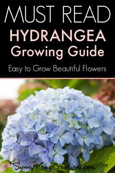 Here are all the tips, tricks and what you need if you want to grow Hydrangeas in a flower shrub garden this growing season. This plant is easy to grow and take care of and has beautiful blooms. Hydrangea Tree, Hydrangea Seeds, Hydrangea Shrub, Hydrangea Bloom, Hydrangea Not Blooming, Hydrangea Garden, Pruning Hydrangeas, Hydrangea Landscaping, Landscaping Ideas