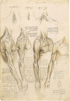 The muscles of the shoulder, arm, and neck, 1510-15 (image from Leonardo da Vinci, Anatomist)