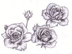 rose illustrations