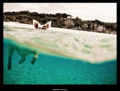 Shane O Neill, Swimming Pig Pig Island, Pig Beach, Swimming Pigs, Bahamas Vacation, Treasure Planet, Disney Films, Commercial Photography, Creative Photography, Professional Photographer