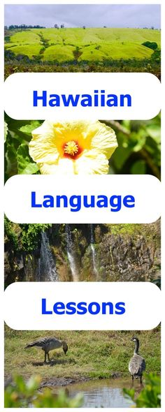 Learn Hawaiian or 'Olelo Hawai'i from the comfort of your own home with an actual native speaking teacher. Live interaction and FREE resources! Hawaii Vacation, Hawaii Travel, Vacation Ideas, Hawaiian Words And Meanings, Hawaii Language, Language Lessons, Foreign Language, All About Hawaii, Teaching Theatre
