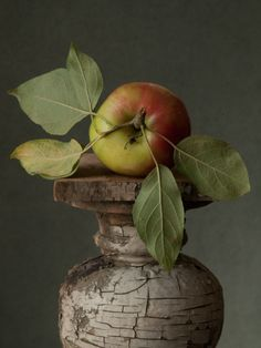 'Heirloom Apple' by Lynn Karlin - Advertising, Fine Arts, Photography from United States Fruit Photography, Dark Photography, Still Life Photography, Still Life Photos, Still Life Art, Live Photos, Photo Fruit, Art Through The Ages, Apple Art