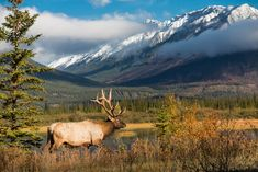 7 Elk Hunting Tips from Real-Life Elk Hunters 7 Elk Hunting Tips from Real-Life Elk Hunters,Boring hunting stuff How Many of These Tips Do You Already Employ Related posts:Best Headlight Restoration Kit: We Found. Elk Hunting Tips, Hunting Packs, Coyote Hunting, Pheasant Hunting, Archery Hunting, Bow Hunting, Hunting Stuff, Hunting Photography, Wildlife Photography
