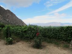 Winery Finca Los Nubes in Argentina. It's a heaven on Earth.