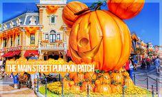 2230. The Main Street Pumpkin Patch