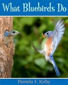 Bluebird of Happiness Meaning - Bing Images