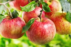 Apples - #1 on the list of zero calorie foods