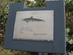 散策していると、時折こういったイルカや鯨の解説が書かれたボードに出会います。  太地町の鯨類への思いの深さを感じます。