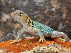 You got: The Lizard Warm enough for ya? Where the climate is warm, the Lizard is King. These ancient relatives of humans possess great strength and take life as it comes. Like the Lizard, you are laid-back and don't stress about trivial things. If threatened, though, you are a fierce enemy.