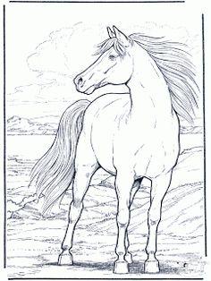 traços cavalos - Pesquisa do Google