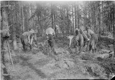 Pataljoona leiriytyy: Teltta kaivetaan syvälle maahan. Haapajärvi, Simola 1941.07.28