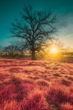 Strange Sunrise by bill baroud on 500px