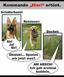 funny picture & Little Differences.jpg& by Friedi. On-lustiges Bild 'Die kleinen Unterschiede. Eine von 14329 Dateien … funny picture & Little Differences.jpg& by Friedi. One of 14329 files in the category & pictures& on FUNPOT. Funny Dog Memes, Funny Cats And Dogs, Funny Animal Videos, Videos Funny, Cute Dogs, Funny Puppies, Tierischer Humor, Man Humor, Animals And Pets