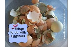 30+ Things To Do With Eggshells