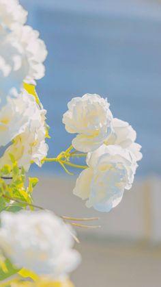 Flower Phone Wallpaper, Kawaii Wallpaper, Wallpaper Iphone Cute, Aesthetic Iphone Wallpaper, Aesthetic Wallpapers, Beautiful Flowers Wallpapers, Pretty Wallpapers, Sky Aesthetic, Flower Aesthetic