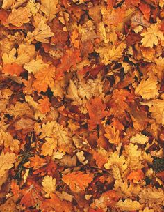 All the best colors of fall can be found in the leaves on the ground. All the earthy browns, golds, oranges, and reds are so beautiful in this season.