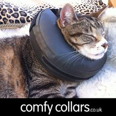 "Smartie wearing his Comfy Collar Size 2... ""Recovering after his operation to remove a mass on his abdomen. Very relaxed wearing his collar."" ...by Sarah"