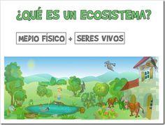 LOS QUINTOS DEL RÍO PILES » Área de Ciencias Naturales