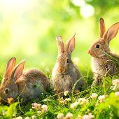 Wielkanoc żyć tapety