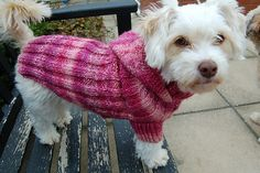 Free Crochet Patterns for Pets | Miss Julia's Vintage Knit & Crochet Patterns: Free Patterns ...