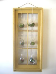 Chuck Does Art: DIY Hanging Window Frame Tillandsia (air plant) Terrarium and Wall Art
