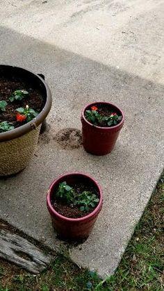 Superior Service, Flower Pots, Flowers, Plants, Flower Vases, Plant Pots, Plant, Planters, Royal Icing Flowers