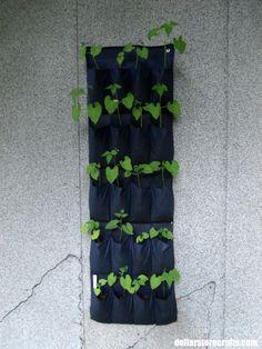 beans in shoe rack - Rhonda's dollar store garden is coming along!