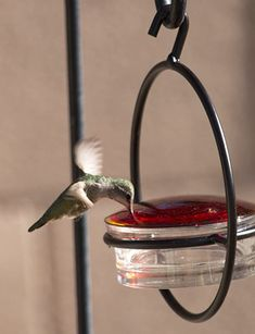 """Love this """"Love Hummingbirds?  We do too :) You'll love this Glass Bee Glass Hummingbird Feeders, Humming Bird Feeders, Squirrel Proof Bird Feeders, Swinging Chair, Amazon Gifts, Wasp, Hummer, Hummingbirds, Suncatchers"""