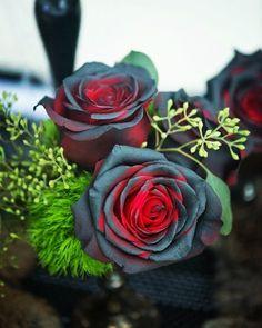 Black and red roses. Gothic Flowers, Dark Flowers, Black And Red Roses, White Roses, Black White, Beautiful Flowers Garden, Pretty Flowers, Red Rose Arrangements, Moon Garden