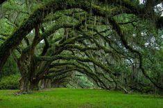 As 16 árvores mais magníficas do mundo