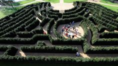 The maze at Cliveden in Buckinghamshire