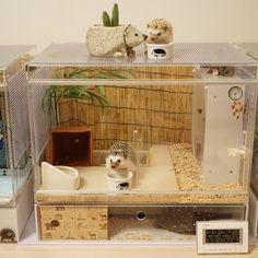 hedgehog cage More Hamsters, Hamster Cages, Chinchillas, Rodents, Hedgehog Habitat, Hedgehog Care, Hedgehog House, Baby Hedgehog, Pets