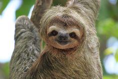 Не будьте ленивцами, больше путешествуйте! Мир интересен. JamAero.ru - Авиабилеты онлайн JamTur.ru - туры онлайн