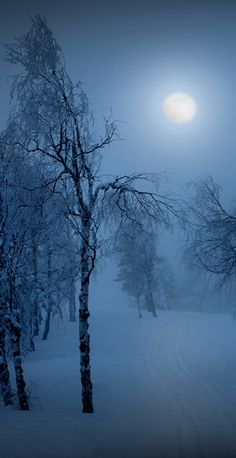 winter solstice traditions | Winter Solstice | C. LaVielle's Book Jacket Blog