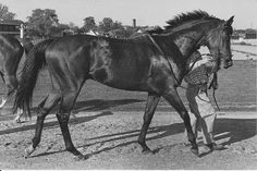 Citation was the eighth American Triple Crown winner, and one of three major North American Thoroughbreds (along with Cigar and Zenyatta) to win at least 16 consecutive races in major stakes race competition. He was the first horse in history to win one million dollars.