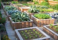 Construire un potager surélevé pour jardiner debout