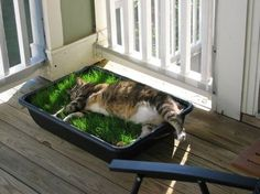Repurpose your old litter box as a cat grass patch! Fill with feline-friendly plants like catnip or most grasses...