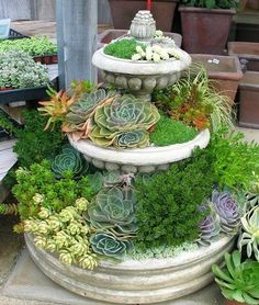 Sedum and Succulent Planters • Tips, Ideas and Tutorials! Including, from 'sue brown', this great succulent planter using an old water fountain.