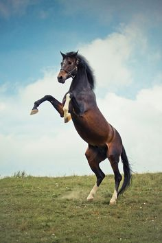 21 Reasons Horses Will End Humanity Horse Rearing, Horse Bridle, Horse Facts, Horse Drawings, Horse Photography, Animals Of The World, Wild Horses, Zebras, Beautiful Horses
