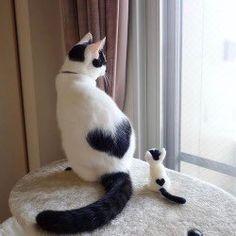Pretty Cats, Beautiful Cats, Animals Beautiful, Beautiful Flowers, Cute Cats And Kittens, Kittens Cutest, Super Cute Kittens, Rare Animals, Animals And Pets