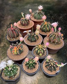Spectacular photos of desert plants by Wachirapol Deeprom, a gifted self-taught photographer, and cactus lover currently based in Bangkok, Thailand. Growing Succulents, Cacti And Succulents, Planting Succulents, Cactus Plants, Cacti Garden, Indoor Plants, Air Plants, Indoor Herbs, Indoor Gardening