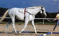 Not terribly detailed, but a good guideline. Horse Training – Longeing Do's and Don'ts
