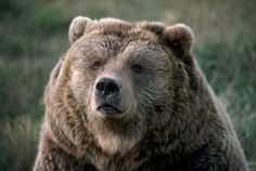 This Pin was discovered by wuvely. Discover (and save!) your own Pins on Pinterest. | See more about Animal.