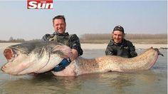 RENOVAÇÃO: 'Peixe monstro' arrasta barco por 1,6 km na Itália...