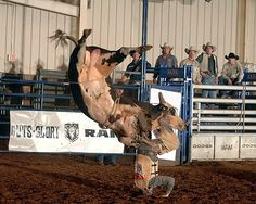 WHICH WAY IS UP?  A contestant is thrown to the ground by a twisting bucking bull - Bull Riding.