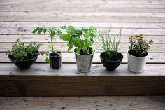 indoor garden // alana k davis