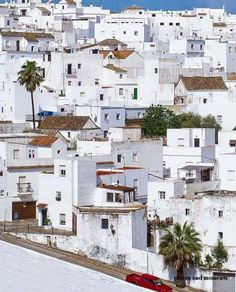 SPAIN / ANDALUSIA / Places, towns and villages of Andalusia - Jerez de la Frontera,