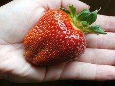 Algún día las fresas serán más grandes que yo, xDDDD.